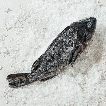 한산도 국내산 손질 생우럭1미(250g내외)