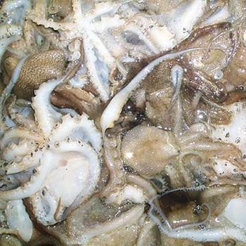 서해안 천수만 주꾸미(쭈꾸미)1kg(6~15미내외)
