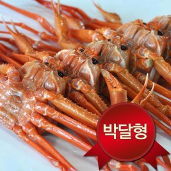 영덕 박달홍게(대)3미(마리당400g내외/수율80~90%)
