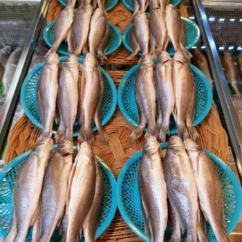 싱싱수산 제수용 뾰족조기3미(41~42cm내외)
