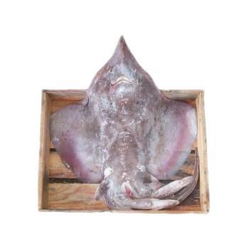 전복마을 국내산 홍어1마리5kg내외(애,뼈 포함)