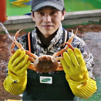 강구항 박현열 선주의 영덕대게3kg(7미)