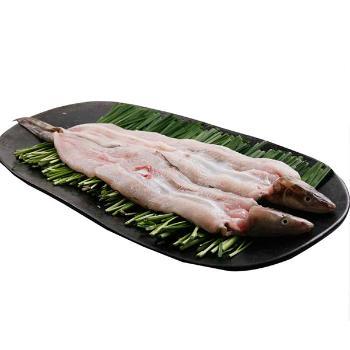 통영산 싱싱 활바다장어(대)1kg(2-3미)