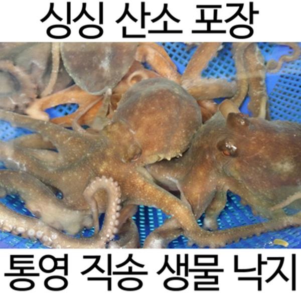 통영직송 싱싱낙지(중대)3미(미당100~300g내외)