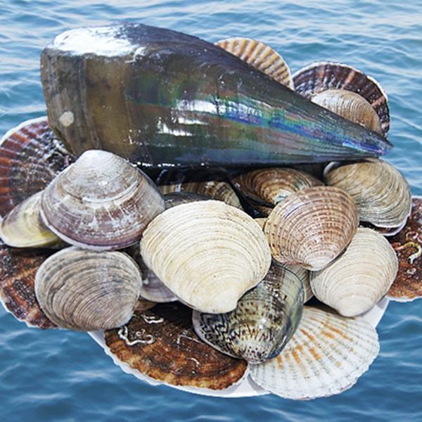 바다마트 대천항 모듬조개구이세트(4.5kg내외/4인분)